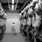 Carcasses bêtes de pâques